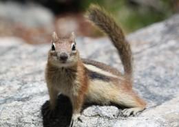 活泼可爱的小松鼠图片_16张