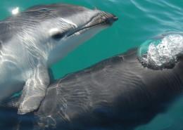 水中的海豚图片_10张