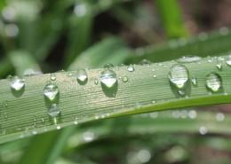 掛著水滴的葉子圖片_10張