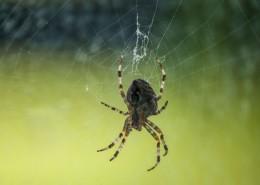 蛛網上的蜘蛛圖片_12張