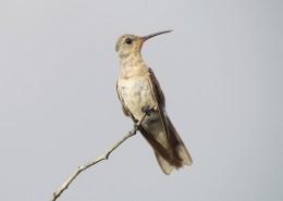 小巧的蜂鸟图片_11张