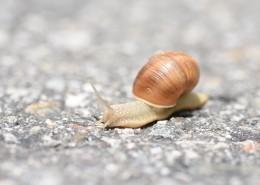 缓慢爬行的蜗牛图片_13张