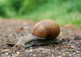 蜗牛高清图片_15张