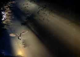 陽光穿過樹縫唯美風景圖片_12張