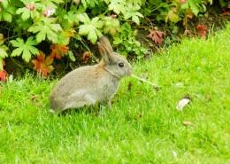可愛呆萌的兔子圖片_15張