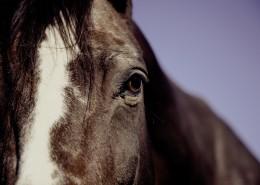 健壮的马匹图片_9张