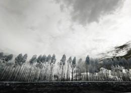 黑白风景摄影图片_11张