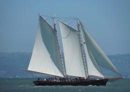 海上航行的白帆船图片_12张