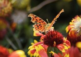 漂亮的斑点胡蝶图片_10张