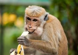 油滑心爱的猴子图片_11张