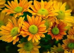 绽放的花朵图片_12张