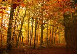 秋天樹林風景圖片_13張