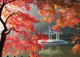 秋季唯美枫叶图片_12张