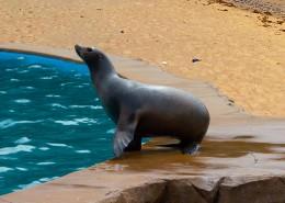 一只可愛的海獅圖片_14張