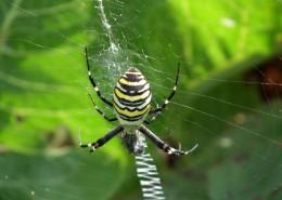 一只蜘蛛高清图片_15张