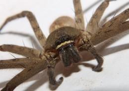 蜘蛛微距图片_12张