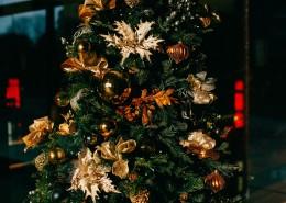 装饰精美的圣诞树图片_16张