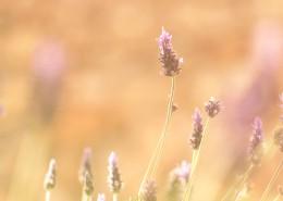 唯美小清新植物图片_11张