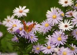 多彩的花丛图片_11张