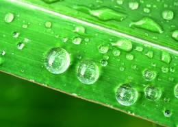 掛著水珠的綠葉圖片_14張