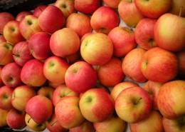 一堆苹果图片_16张