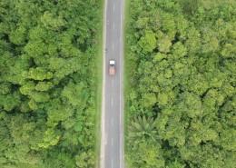 树林里的公路图片_13张