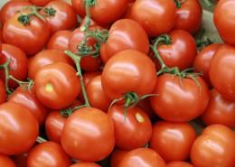 鲜红的西红柿图片_13张