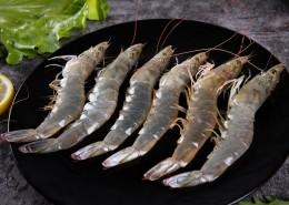 美味新鮮的基圍蝦圖片_17張