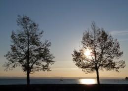 傍晚唯美的树图片_14张