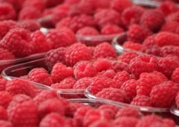 又紅又甜的山莓圖片_12張