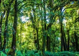 热带雨林图片_11张