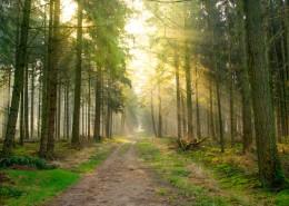 静谧的林间小路图片_14张