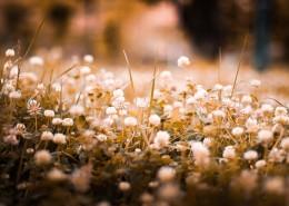 复古色调的植物背景素材图片_10张