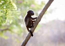 可愛的黑色猴子圖片_9張