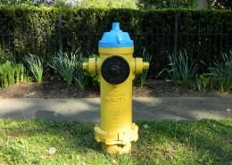 路面上的消防栓图片_14张