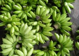 未成熟的绿色香蕉图片_15张