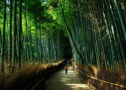 翠綠的竹林圖片_11張