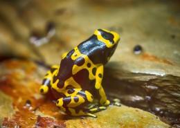 色彩鲜艳的青蛙图片_11张
