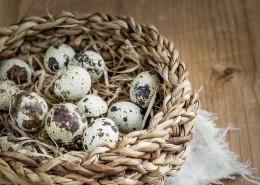 富含營養的鵪鶉蛋圖片_9張