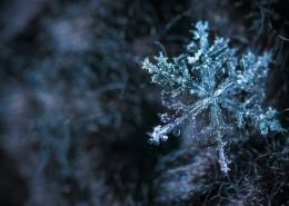 显微镜拍摄的雪花图片_13张