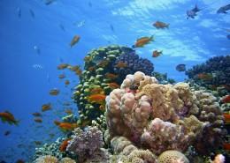 海底的珊瑚礁图片_15张