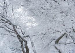 结霜的树枝图片_13张