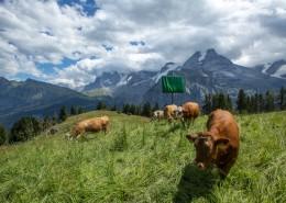 瑞士阿爾卑斯山風景圖片_8張