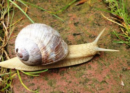 爬行的蜗牛图片_12张