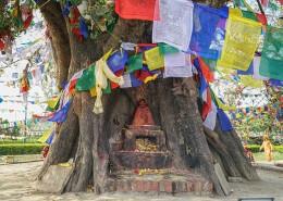 尼泊尔蓝毗尼释迦摩尼诞生地菩提树风景图片_11张