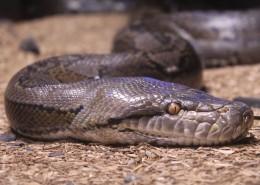 冰冷危险的毒蛇图片_16张