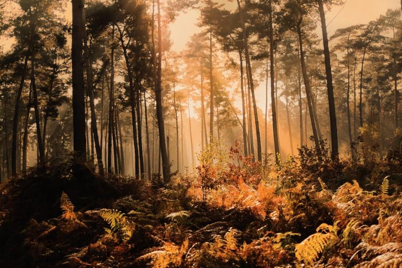 点击大图看下一张:茂密的森林图片