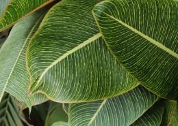 綠葉背景素材圖片_10張