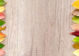 放着叶子的木板背景素材图片_9张