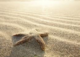 沙滩上的海星图片_14张